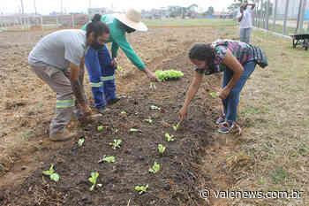 Projeto Horta Comunitária é lançado pela Prefeitura de Pindamonhangaba - Vale News
