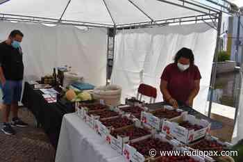 Mercado de Pequenos Produtores e Artesãos do Concelho em Aljustrel - Rádio Pax