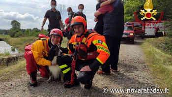 Galliate, i vigili del fuoco salvano un cane intrappolato in un canale di irrigazione - NovaraToday