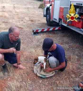 Cagnolina cade in un pozzo a Caltagirone, salvata da vigili del fuoco - BlogSicilia.it