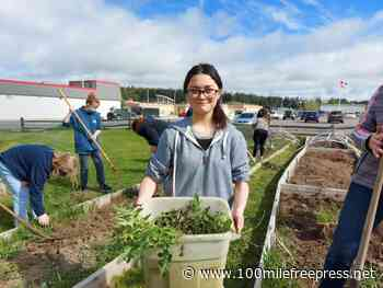 Student gardeners grow food for community - 100 Mile Free Press