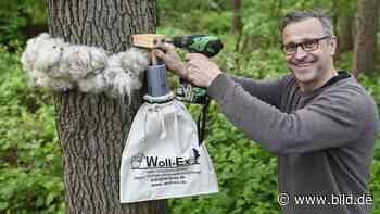 Telgte/Haltern: Mit Wolle gegen den Eichenprozessionsspinner - BILD