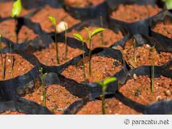 Kinross doa mudas em celebração ao Dia do Meio Ambiente - Notícias - paracatu.net