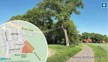 Bau- und Umweltausschuss in Wiefelstede: Bäume sollen Baugebiet weichen - Nordwest-Zeitung