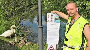 Schwanensee in Prichsenstadt: Warum ein Tierschützer sauer ist - Main-Post