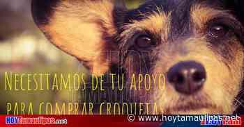 Realizan subasta en beneficio de perritos en Ciudad Victoria - Hoy Tamaulipas