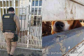 PM de Jacutinga (MG) resgata cães vítimas de maus-tratos e dono é preso em flagrante - Portal de Pinhal ®