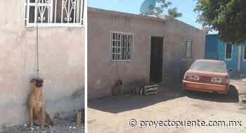 Denuncian vecinos de Villa Dorada en Empalme maltrato de perrito; lo dejan amarrado de lo alto de una ventana - Proyecto Puente