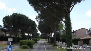 Saint-Orens-de-Gameville. Pétition : 500 signataires contre l'abattage des arbres - ladepeche.fr