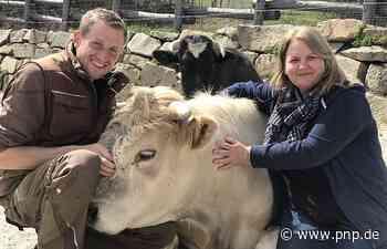 Ein Zuhause für Stier Ferdinand und seine Freunde - Passauer Neue Presse