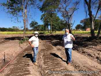 Pequenos agricultores de Formosa do Rio Preto apostam na cultura do alho - Jornal da Mídia