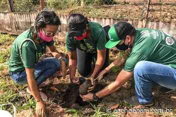 Em Monte Alegre, Emater participa de programação relativa à Semana do Meio Ambiente - Para
