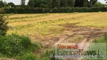 Picturesque Keswick poppy field transformed by developers - Norwich Evening News