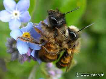Un geste pour les abeilles - La République du Centre