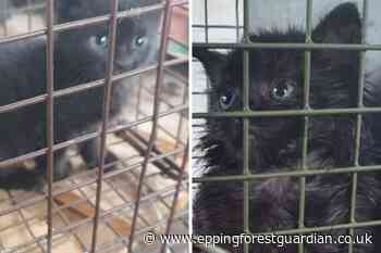 Kittens rescued after falling down drain in Waltham Abbey - Epping Forest Guardian