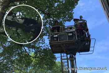 Cat needs Fire Brigade's aerial lift to get down from tree