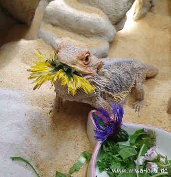 Schwer vermittelbare Tiere auf Grund spezieller Bedürfnisse - www.wiwa-lokal.de