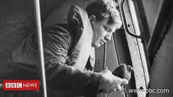 A engenhosa operação com pombos-correio que espiavam nazistas na Segunda Guerra Mundial - BBC Brasil
