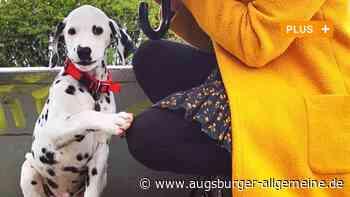 Corona und das Problem mit dem Hund - Augsburger Allgemeine