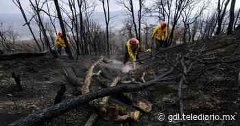 La Primavera. Inician acciones de conservación en el bosque - Telediario Guadalajara