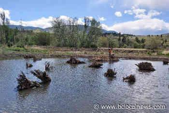 Okanagan river salmonid sampling happening near you in Penticton – BC Local News - BCLocalNews