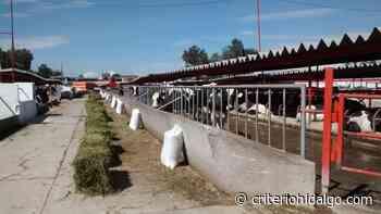 Muere sujeto al ser atropellado en la Cuenca Lechera de Tizayuca - Criterio Hidalgo