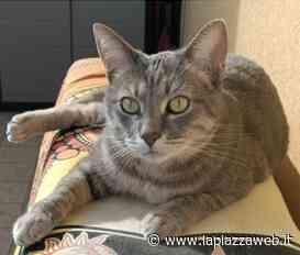 Noventa Padovana, gatto smarrito: si cerca Shiro - La PiazzaWeb - La Piazza