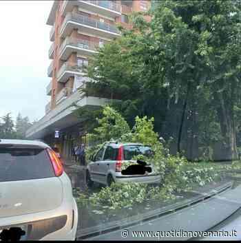 MALTEMPO - Grandine in tangenziale, albero caduto su un'auto a Collegno, caos tombini a Rivoli - QV QuotidianoVenariese