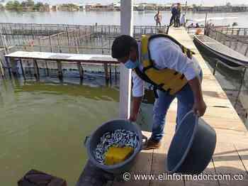En Puebloviejo, sensibilizaron sobre el correcto cultivo de peces y la protección de especies menores - El Informador - Santa Marta