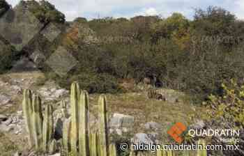 Mejoran el corredor turístico del Puma en Actopan - Quadratín Hidalgo