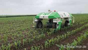 Hack-Roboter bei Bernburg vorgestellt: Ein Dinosaurier soll Landwirten helfen - MDR