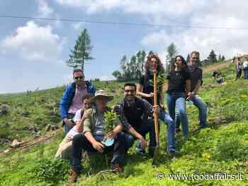 Verallia Italia contribuisce alla rinascita dei boschi dell'Altopiano di Asiago dopo la tempesta Vaia - Food Affairs