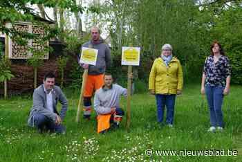 Ichtegem kiest de kaart van de bijen - Het Nieuwsblad