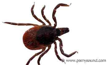 Ticks in North Bay, Parry Sound test positive for Lyme Disease - parrysound.com