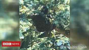 Leighton Buzzard school closed due to bee swarm