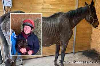 Sussex stable owner Kate Greenhalgh spared jail over horses' pain