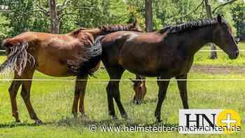 Pferde werden auf zwei Weiden im Kreis Helmstedt verletzt - Helmstedter Nachrichten
