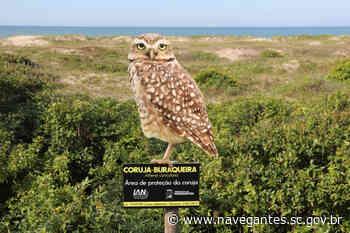 Instituto Ambiental de Navegantes instala 11 placas para a preservação da Coruja-buraqueira - Prefeitura de Navegantes