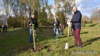 Rotary in der Uckermark: Rotarier forsten Dorfmitte in Passow bei Schwedt mit Baum-Spenden auf - moz.de