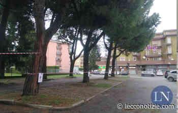 Cambia Merate interroga sui pini da abbattere in viale Verdi davanti all'asilo - Lecco Notizie