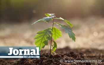 Nazaré plantou 400 árvores autóctones nas ruas - Jornal de Leiria