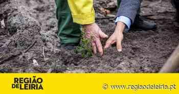 Quercus vai plantar 1.500 árvores no Pinhal de Leiria com apoio da Fundação Cepsa - Região de Leiria