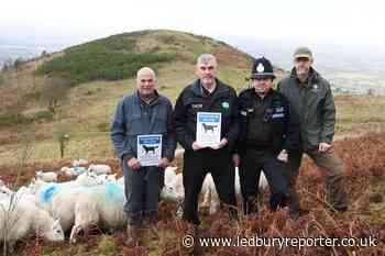 Urgent message to dog walkers after Malvern Hills sheep attacks