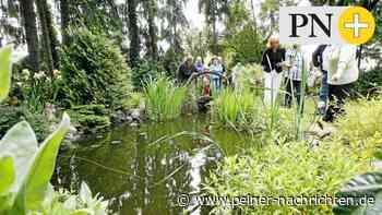 Offene Pforte Peine – drei Gärten geöffnet - Peiner Nachrichten