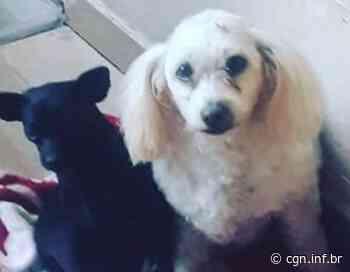 Duas cachorrinhas estão desaparecidas, no Bairro Jardim Gramado - CGN