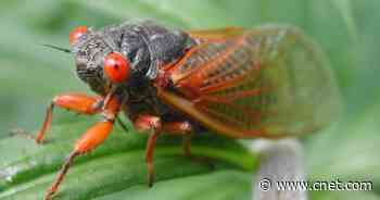 Cicadas ground press plane tailing President Biden to Europe     - CNET