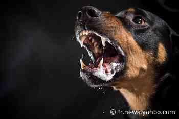 Antibes : un livreur violemment attaqué par cinq chiens - Yahoo Actualités