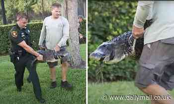 Woman, 43, is bitten by an eight-foot ALLIGATOR while walking her dog in Florida