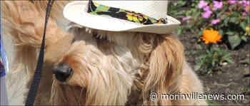 Heritage Lodge holds Seniors Week Puppy Parade – Morinville News – Morinville Online - MorinvilleNews.com