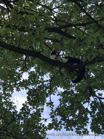 Brighton and Hove News » Cat rescued from tree by firefighters - Brighton and Hove News